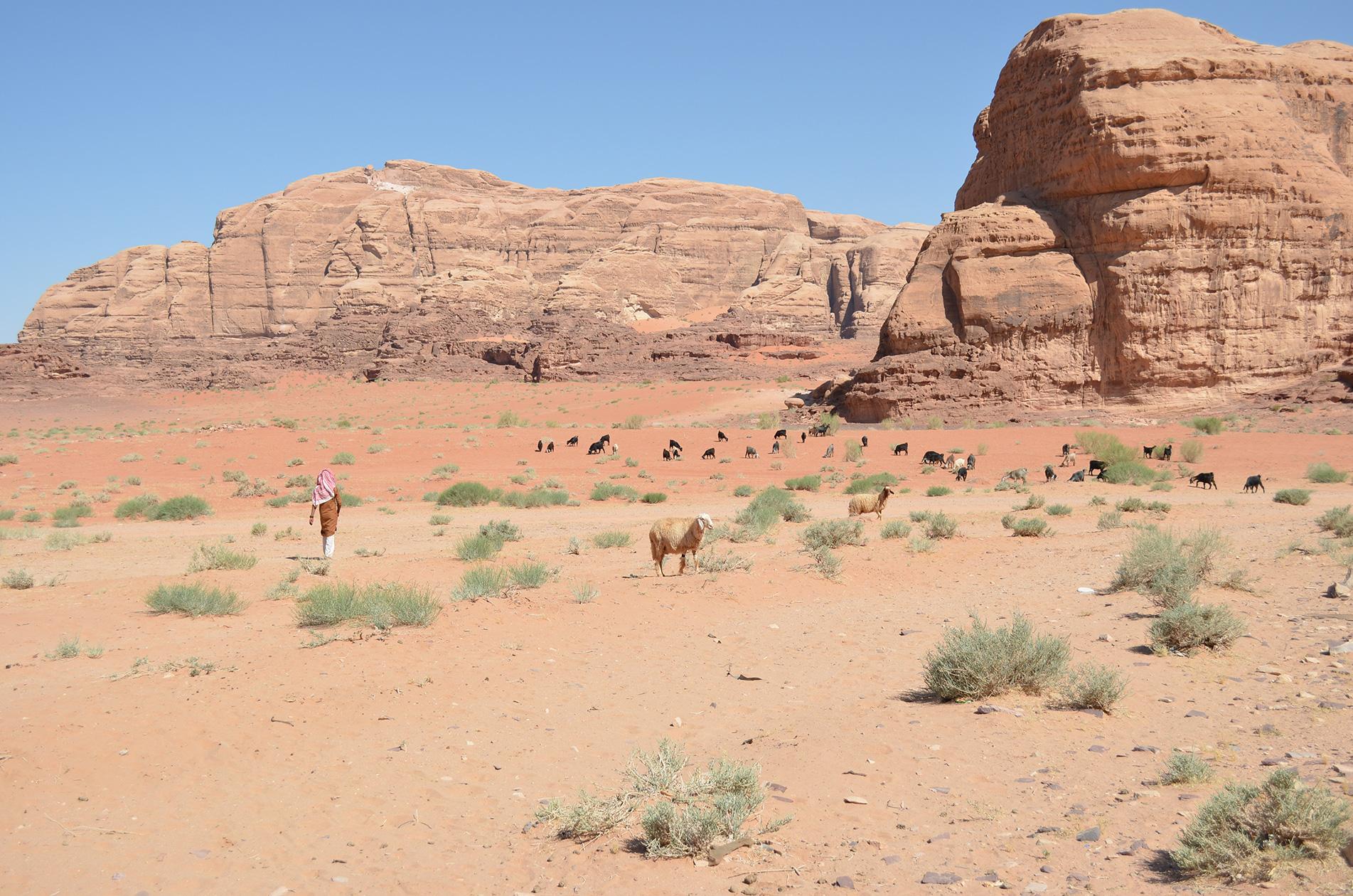 Bedouin life